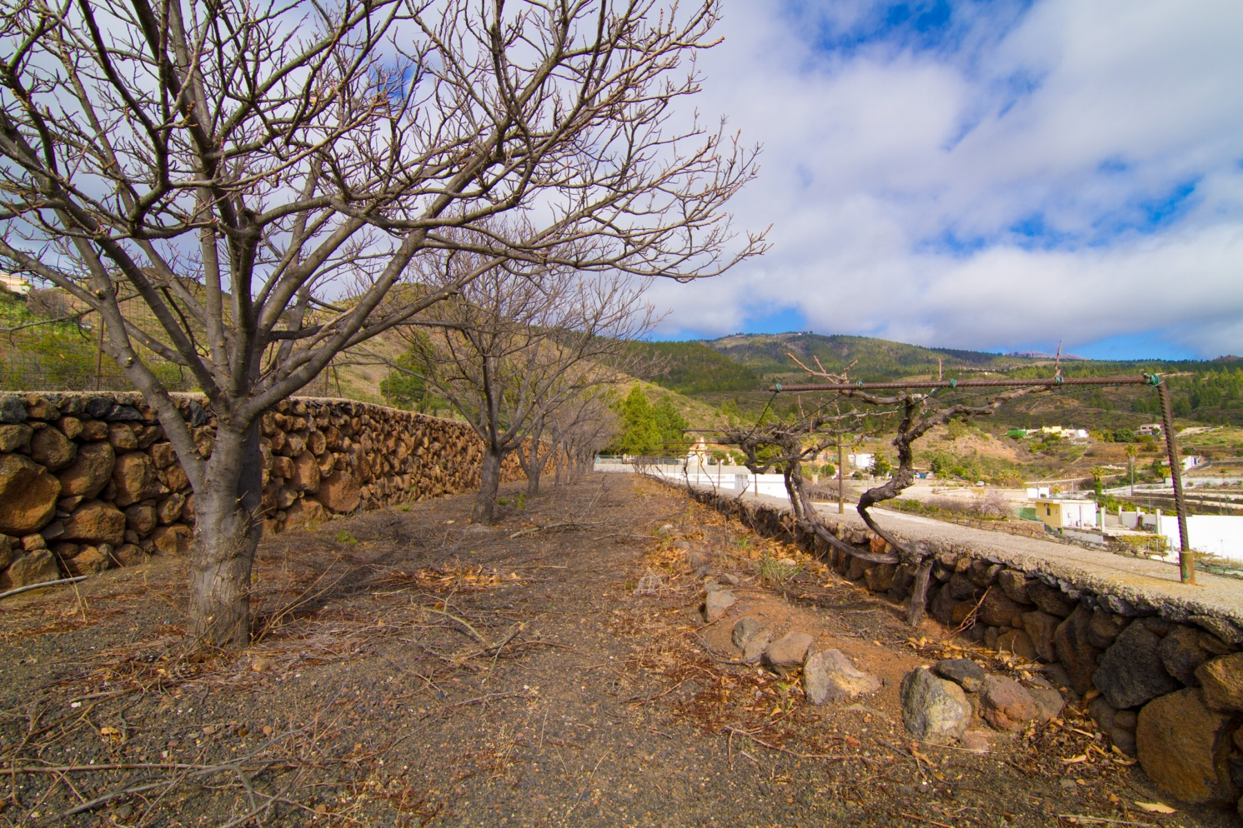 Properties for Sale in Tenerife, Canary Islands, Spain | SylkWayStar Real Estate. Finca with vineyard - Cruz de Tea - Granadilla de Abona . Image-21863