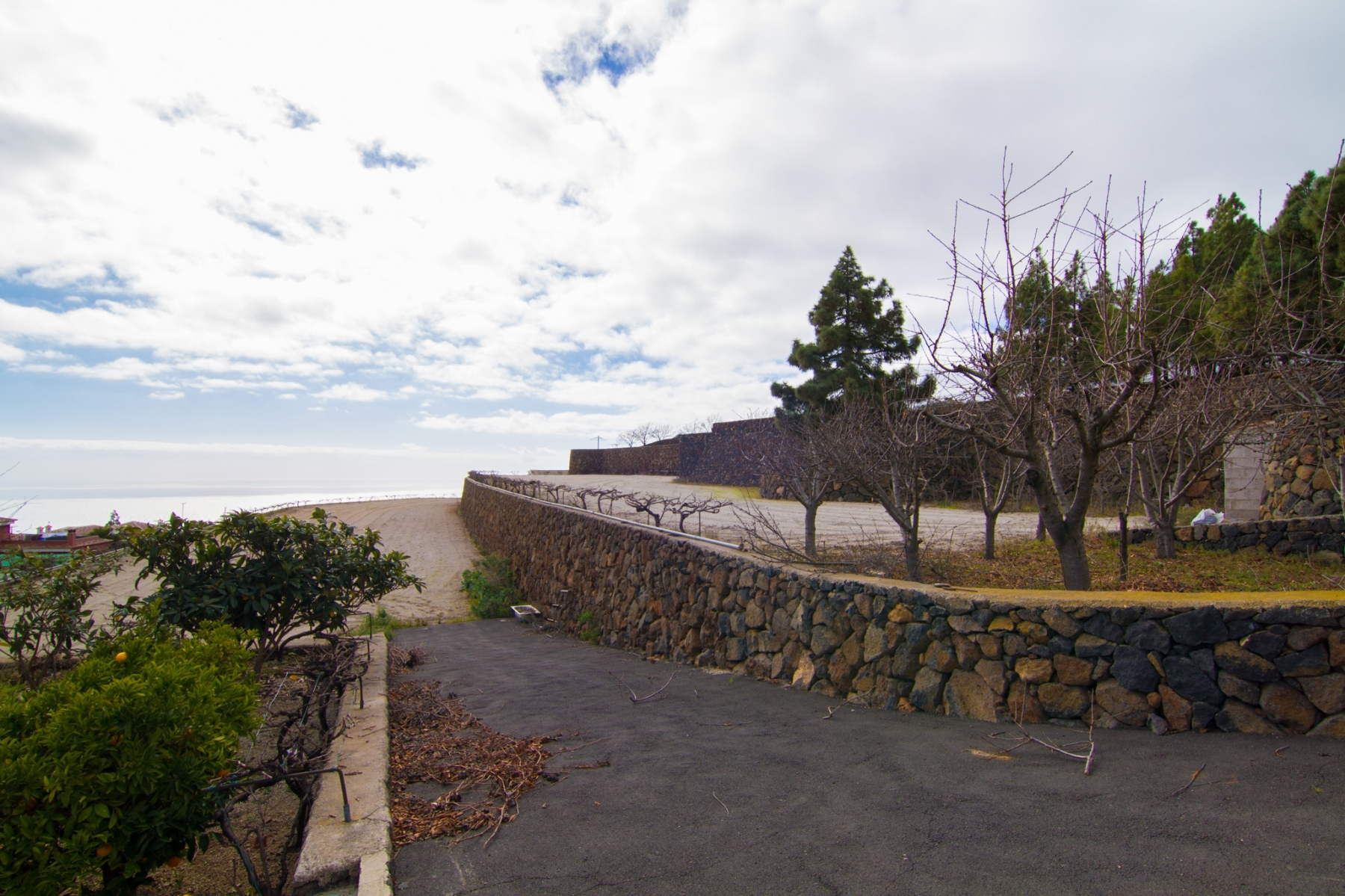 Properties for Sale in Tenerife, Canary Islands, Spain | SylkWayStar Real Estate. Finca with vineyard - Cruz de Tea - Granadilla de Abona . Image-21852